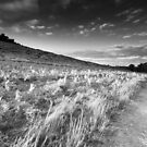 Long Shadows on Dale Spinney BW by Andy Freer