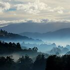 Huonvalley South Tasmania by Imi Koetz