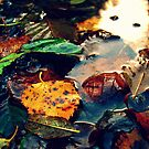 LEAVES IN A PUDDLE by Annie Japaud