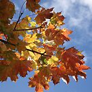 Blue Sky and Autumn Leaves by shiro