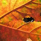 Autumn Leaf by shiro