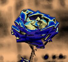 Blue Rose by Nhan Ngo