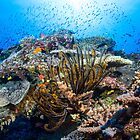 Reef Life by Mark Rosenstein