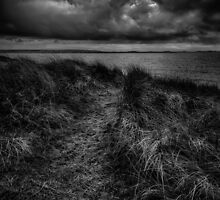 Path through the Dunes by Alan E Taylor
