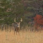 Eight Pointer by photodug
