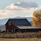 Mr. Jones had a barn ... by Barb Miller