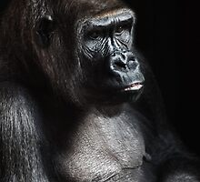Lonely Gorilla by TilenHrovatic