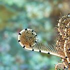 Feather Star by Mark Rosenstein