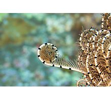 Feather Star Photographic Print