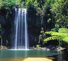 Millaa Millaa Falls on film by Martin Canning