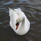 Swan on a Lake by RachelSheree