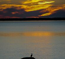 Cormoran at Saint Lawrence River  Québec by 29Breizh33