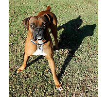 Throw The Ball! NOW! Photographic Print