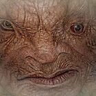 The Face of Boe  by Selina Ryles