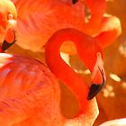 Flamingo  by arr333