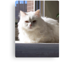 Cat In The House Canvas Print