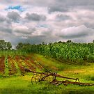 Farm - Organic farming  by Mike  Savad