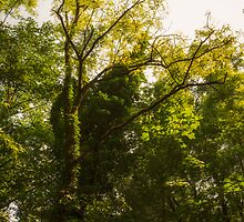 Forest in summer by fodorpetya
