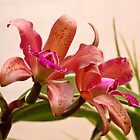 Orchid - Tickled pink  by Mike  Savad