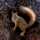 Squirrel by Alex Preiss