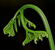 New Born - Fern Frond by MotherNature2