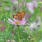 Butterfly Lost by kibishipaul