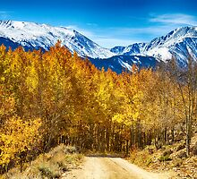 Rocky Mountain Autumn Cruisin by Bo Insogna