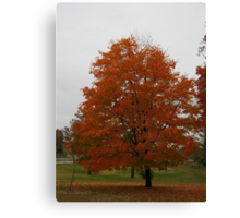 Fall 2013 9 Canvas Print