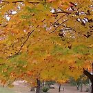 Fall 2013 11 by dge357