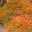 Fall 2013 12 by dge357
