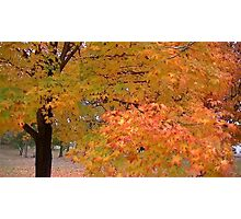 Fall 2013 12 Photographic Print