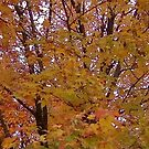 Fall 2013 16 by dge357