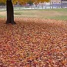 Fall 2013 26 by dge357