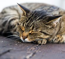 Sleeping cat by Daniele Zighetti