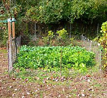 The Autumn Salad Garden by Vivian Eagleson