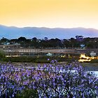 Port Augusta - Jacaranda Morning by Georgie Sharp
