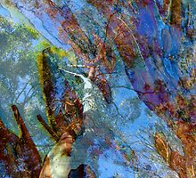 Trees & Bark Abstract. by ronsphotos