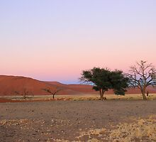 Sossusvlei by Jennifer Sumpton