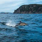 Dolphin on tassy coast  by Robert-Todd