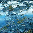Petrification of trees Curio Bay by Imi Koetz