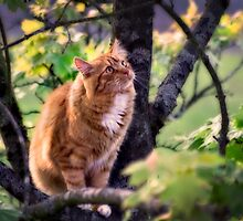 Ambro up a Tree by Karen Brodie