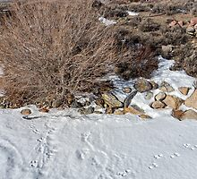 Rabbit Tracks in the Snow by Kathleen Bishop