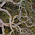 Branch on Mossy Rock by John Butler