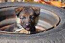 Puppy in Tire by Sandy Keeton