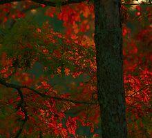 Wood Fire by Eileen McVey