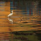 Little Egret by Adrian McGlynn