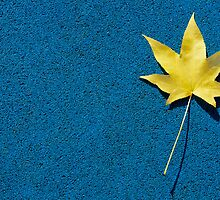 Yellow leaf on blue ground by Daniele Zighetti