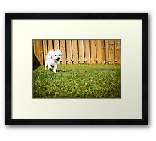 Play Time Framed Print