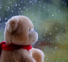 Rainy days for the Ted by Elena J