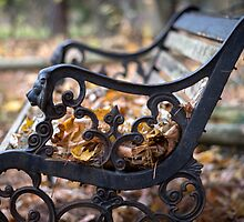 Where The Leaves Rest by Mikell Herrick